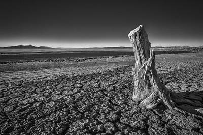 Surreal Landscape Photograph - Sultry Salt Tree by Peter Tellone