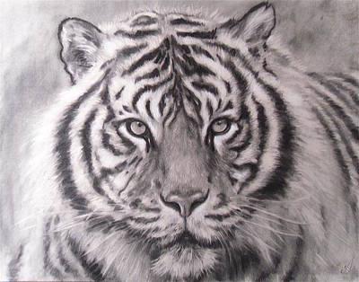 Sumatran Tiger Print by Adrienne Martino