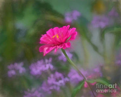 Flora Photograph - Summer Afternoon Summer Afternoon by Kerri Farley