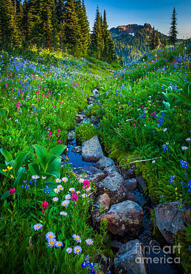Lupine Photograph - Summer Creek by Inge Johnsson