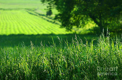 Summer Fields Of Green Print by Sandra Cunningham