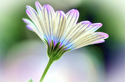 Flowers Photograph - Summer Flower by Nadia Sanowar