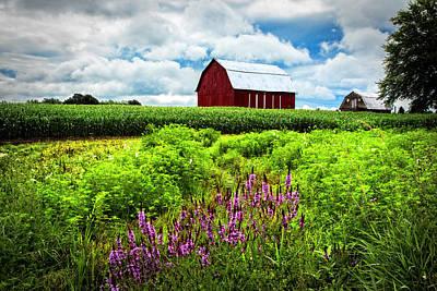 Mennonite Photograph - Summer Flowers In The Fields by Debra and Dave Vanderlaan