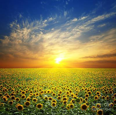 Sunflowers Digital Art - Summer Landscape Beauty Sunset Over Sunflowers Field by Caio Caldas