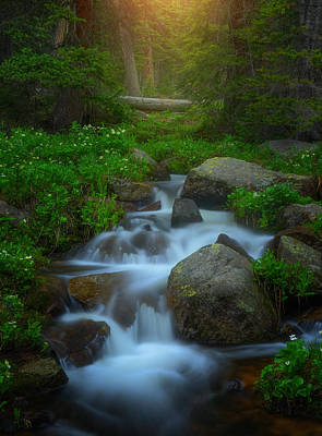 Summer Stream Print by Darren  White