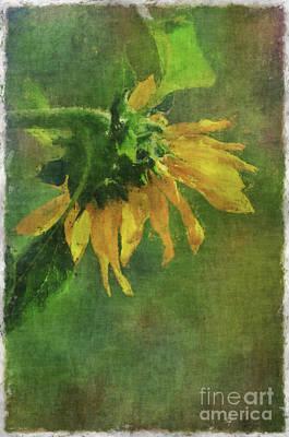 Summer Sunflower Print by Debbie Portwood