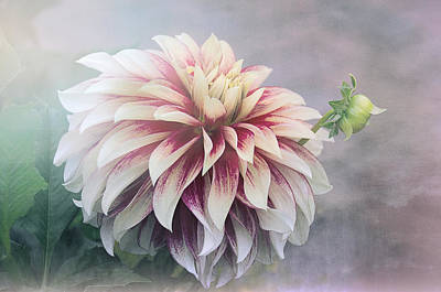 Summer's Dahlia Print by Julie Palencia