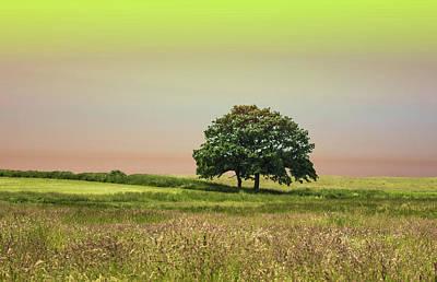 Forest Floor Photograph - Summer's Evening by Martin Newman