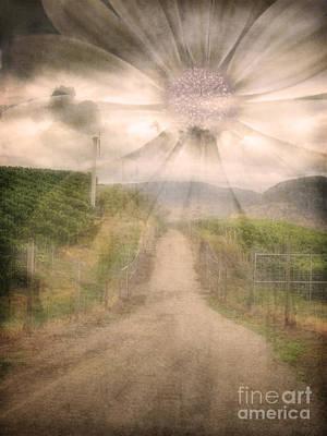 Vineyard Digital Art - Summer's Last Light by Tara Turner