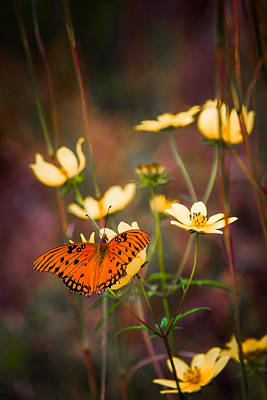 Butterfly In Flight Photograph - Summertime Monarch by Parker Cunningham