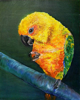 Sun Conure Original by Art by Kar