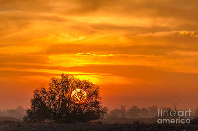 Photograph - Sun Fire by Greg Summers