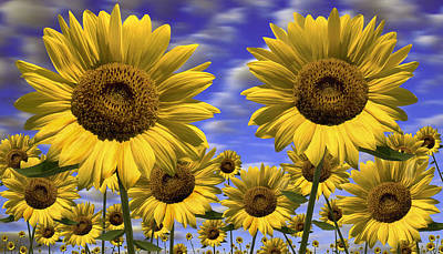 Sun Flowers Print by Mike McGlothlen