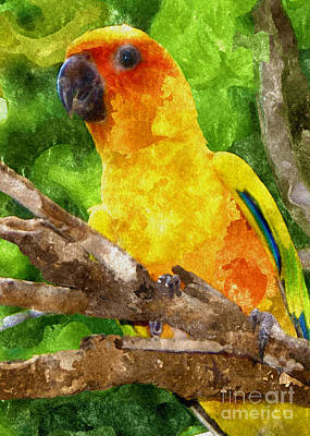 Parakeet Mixed Media - Sun Pparakeet by Olga Hamilton