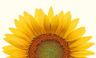 Sunflowers Photograph - Sun Rise by Richard Moiger
