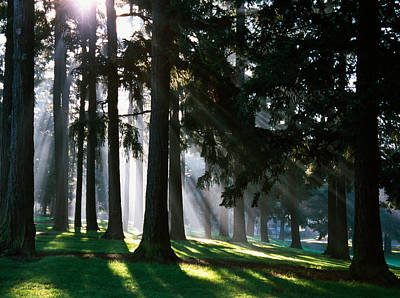 Bursting Photograph - Sunbeams Through Misty Trees, Oregon by Panoramic Images