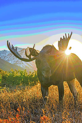 Sunburst In The Antler Abstract 1 Print by Tim Grams