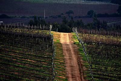 Sun Ray In The Vineyard Print by Fernando Lopez Lago