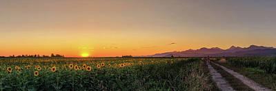 Tuscany Photograph - Sunfield Road by Matteo Viviani