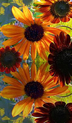 Fushia Photograph - Sunflower Bursts by Tina M Wenger
