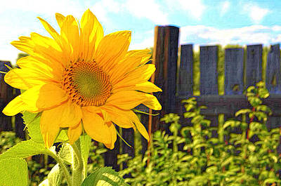 Sunflower By The Fence Print by L Brown
