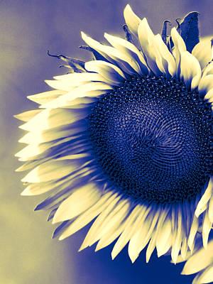 Sunflower Sunrise Print by William Dey