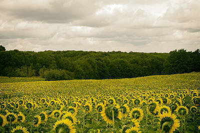 Field Of Crops Photograph - Sunflower Field In France by Georgia Fowler