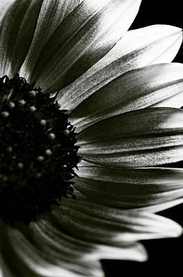 Sunflower Print by Fine Arts