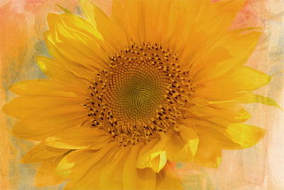 Sunflower Kisses Print by Georgiana Romanovna