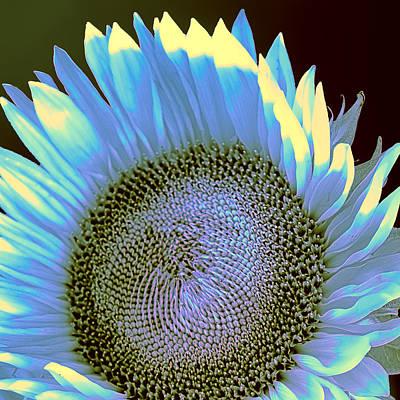 Sunflower Sunset Print by William Dey