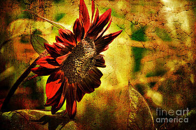 Sunflowers Digital Art - Sunflower by Lois Bryan