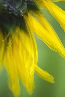 Sunflower Motion Blur Print by Christina Rollo