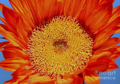 Sunflower On Fire Print by Mary Deal