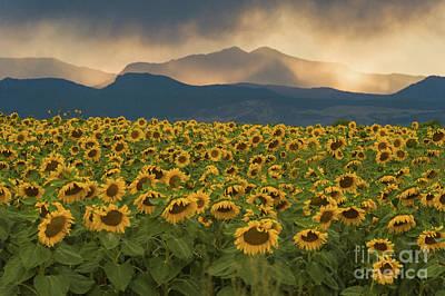 Photograph - Sunflower Rain Dance by Greg Summers