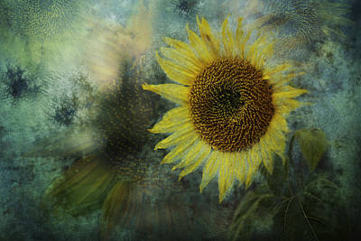 Sunflower Sea Print by Belinda Greb