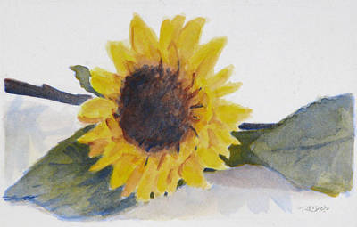 Watercolor Painting - Sunflower Study by Christopher Reid