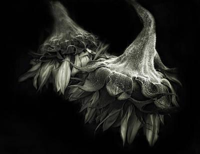 Duotone Photograph - Sunflower Tango by Jessica Jenney