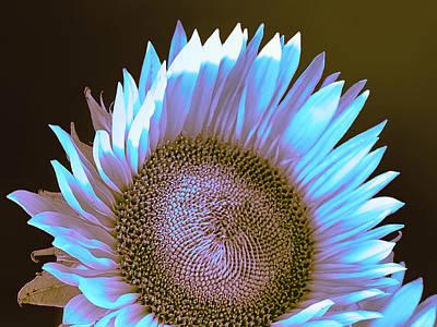 Sunflower Dusk Print by William Dey