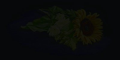 Sunflower Print by Vanda Luddy