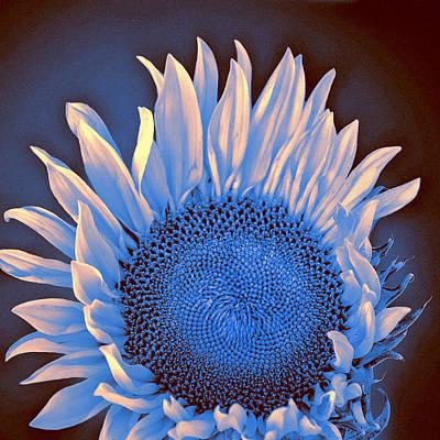 Sunflower Moonlight Print by William Dey