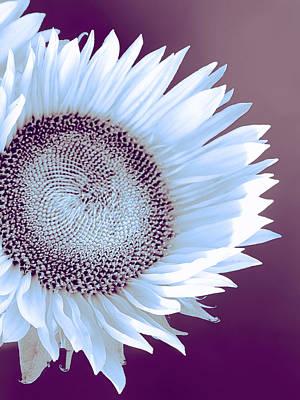 Sunflower Starlight Print by William Dey