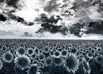 Sunflowers Filed 2 Print by Bekim Art