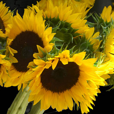 Sunflowers Photograph - Sunflowers by Philip Ralley
