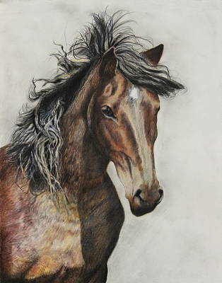 Sioux Drawing - Sunkakhan by Jeanne Fischer