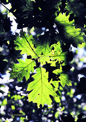 Photograph - Sunlight Through The Leaves by Kay Lovingood