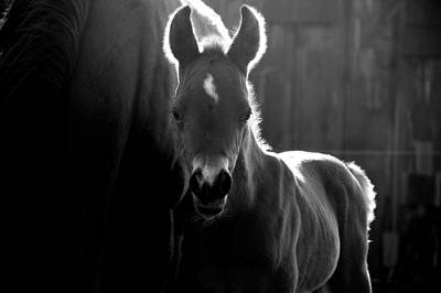 Horse Photograph - Sunlit Foal by Emily Stauring