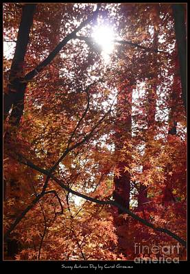 Landscap Photograph - Sunny Autumn Day Poster by Carol Groenen