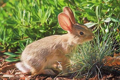 Rabbit Photograph - Sunny Bunny by Donna Kennedy