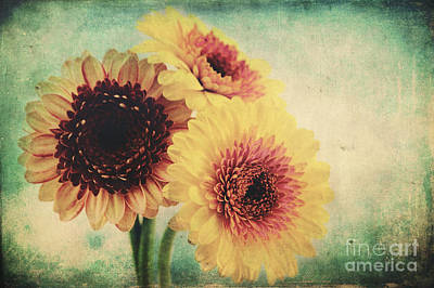 Flower Still Life Mixed Media - Sunny Gerbera by Angela Doelling AD DESIGN Photo and PhotoArt