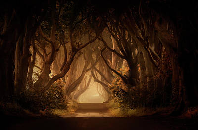 Sunny Morning In Dark Hedges Print by Jaroslaw Blaminsky